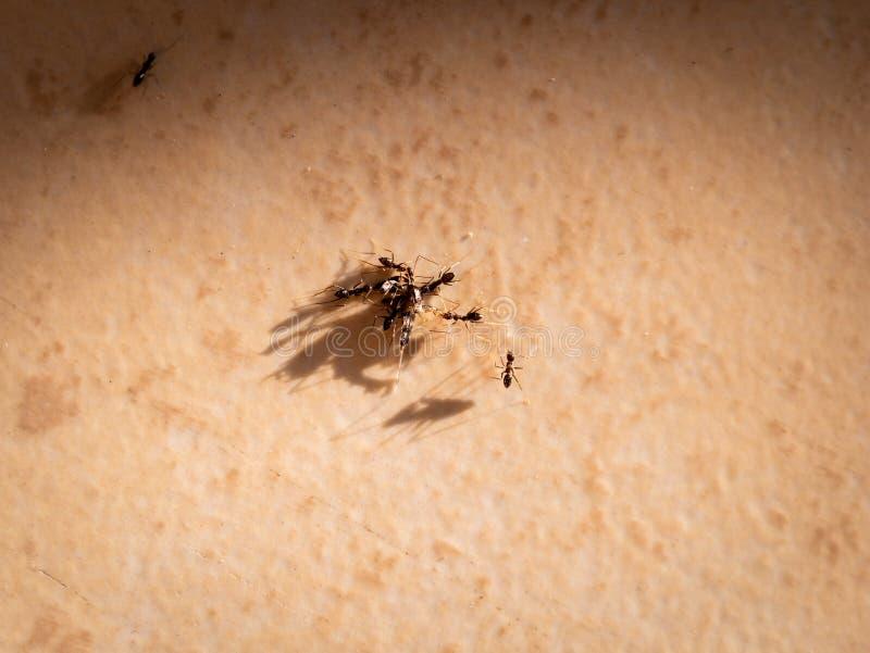 Der Job von Ameisen stockfotos