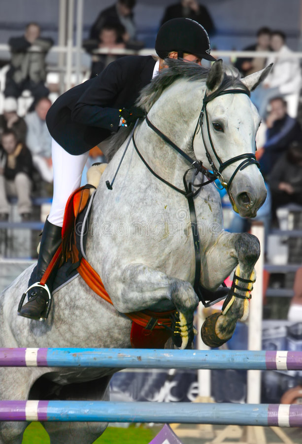 Der Jockey springt durch ein Hindernis stockbilder