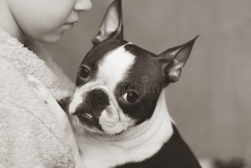 Der Junge interessiert sich, liebt und umfasst zart seinen gewidmeten Freund der Hund Bostons Terrier Schwarzweiss-Foto Pekings,  stockbilder