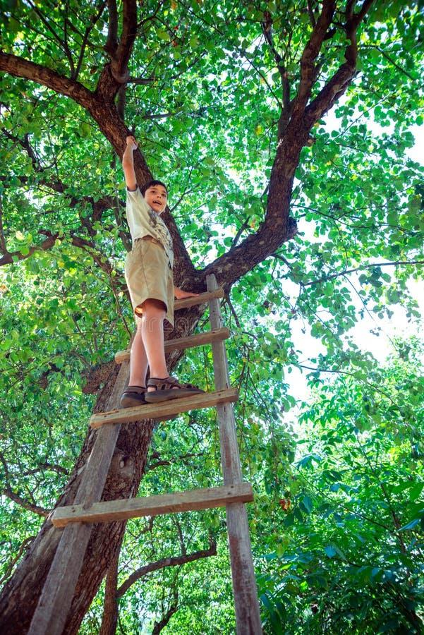 Der Junge steht auf einen hölzernen Stehleiter und lehnt sich an einem Baum in einem Garten oder in einem Park stockbild