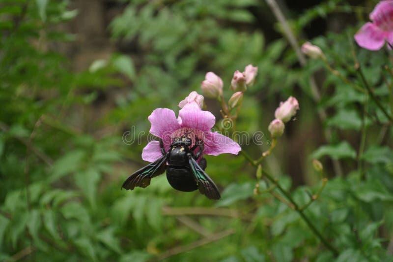 Der Käfer führt seine regelmäßigen Tätigkeiten durch lizenzfreies stockbild