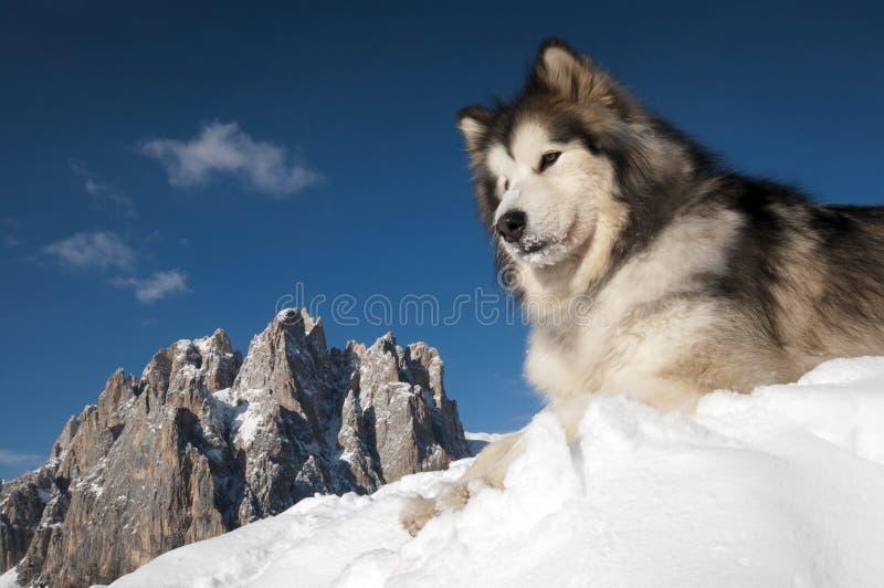 Der König des Berges lizenzfreies stockbild