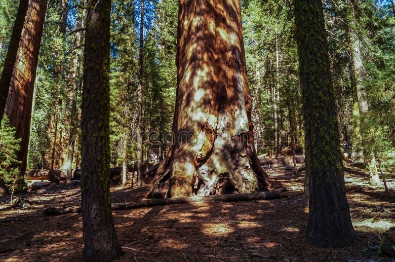 Der König-Schlucht und Mammutbaum-Nationalpark, Kalifornien stockbild