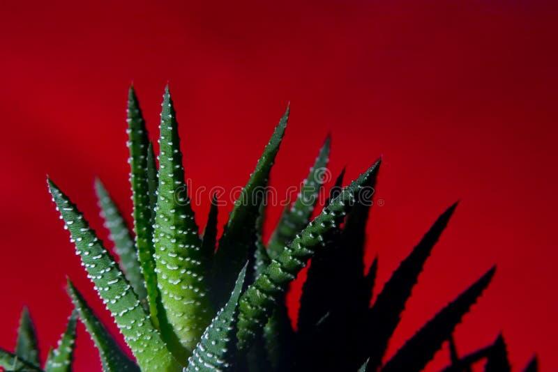 Der Kaktus in den Flammen lizenzfreie stockfotografie