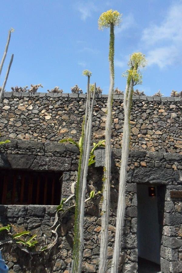 Der Kaktusgarten in der Insel von Lanzarote in den Kanarischen Inseln lizenzfreie stockfotografie