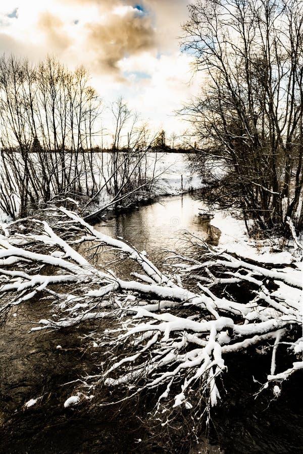 Der kalte Fluss des Winters ist nicht noch, über dem Fluss eingefroren, den ein schneebedeckter Baum hängt stockbild