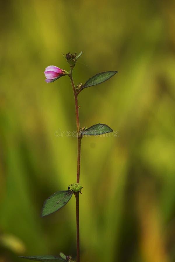 Der kleine Baum des unbekannten kleinen Blumen-Blattes des Hintergrundes der Blume gelben roten lizenzfreie stockfotografie