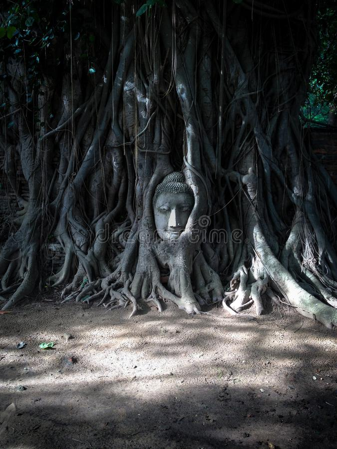 Der Kopf des Buddhas stockfotos