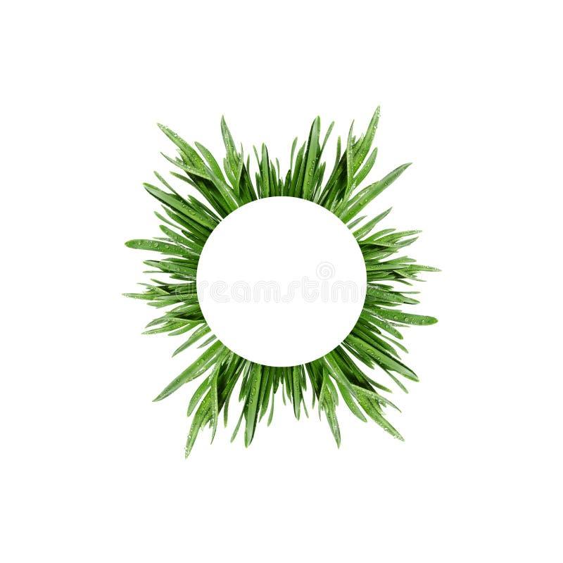der Kreis vom frischen grünen Gras lizenzfreie stockfotografie