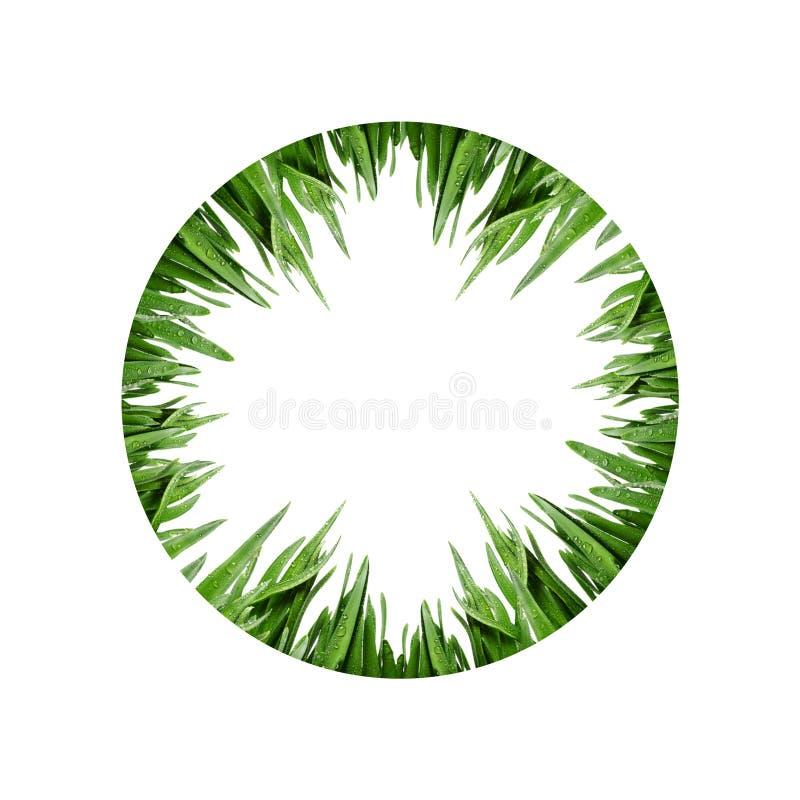 der Kreis vom frischen grünen Gras stockfotografie