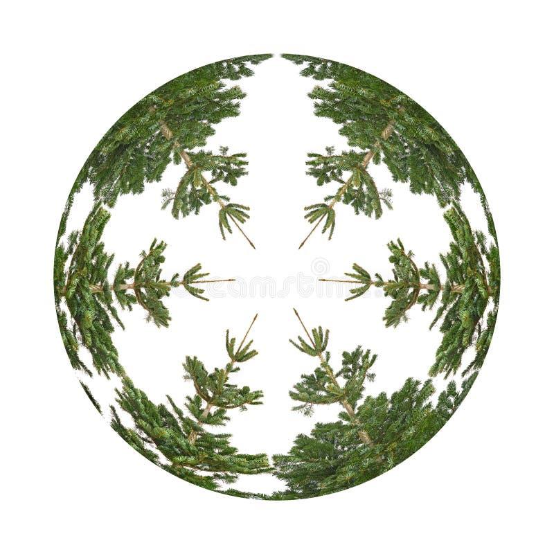Der Kreis von den Bäumen stockfotografie