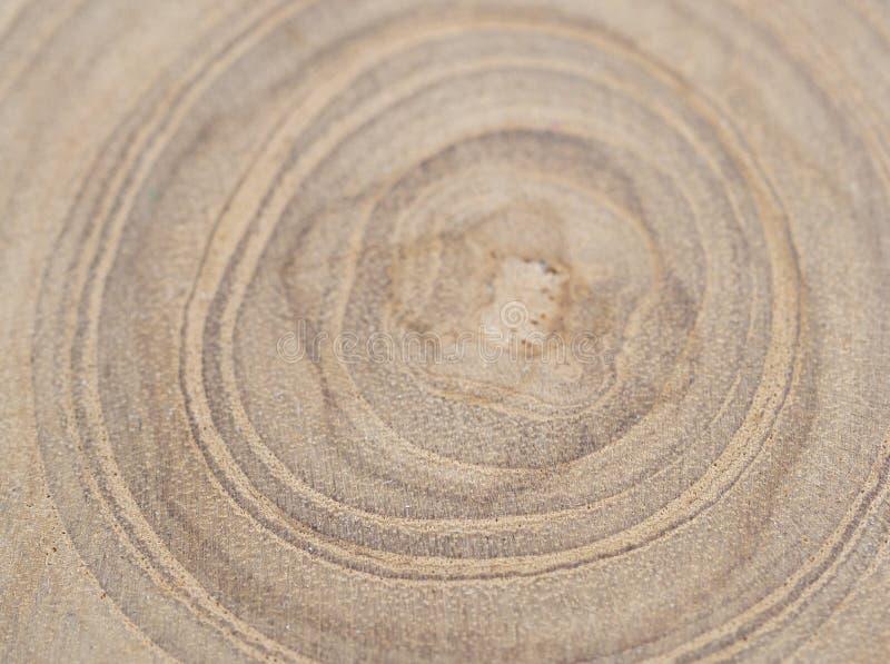 Der Kreisstück holz-Querschnitt mit Baumringbeschaffenheit stockbild