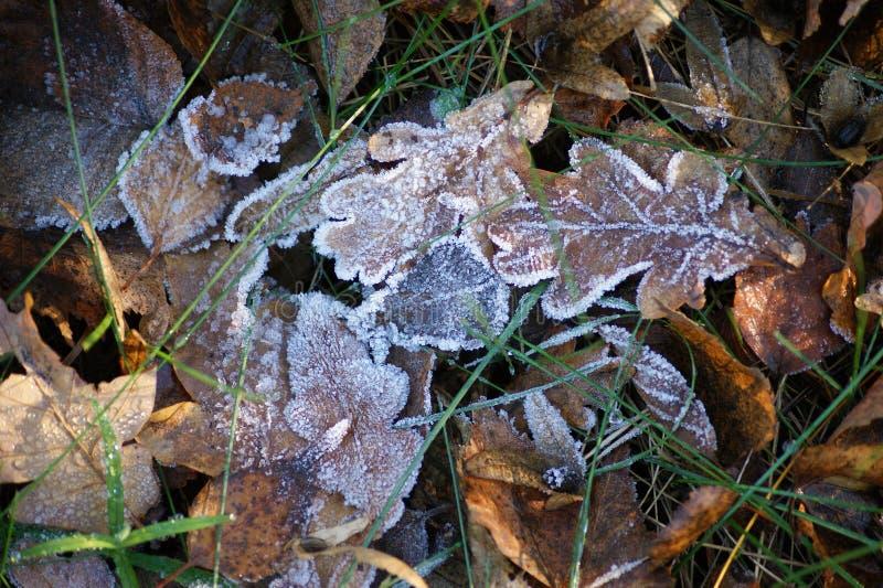 Der Kristallfrost auf den trockenen Blättern stockbild
