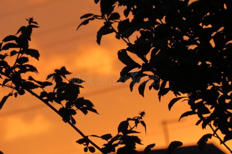Der kupferne Sonnenuntergang stockfotos