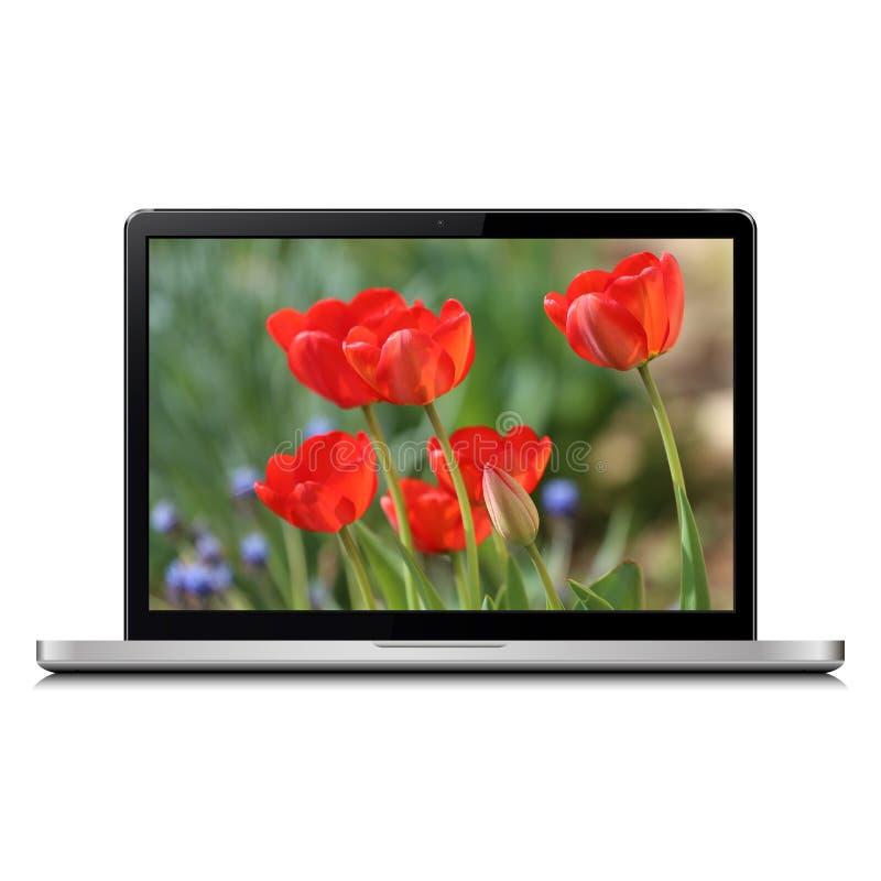 Der Laptop, der auf Weiß mit Tulpe lokalisiert wird, blüht auf Schirm stockbilder