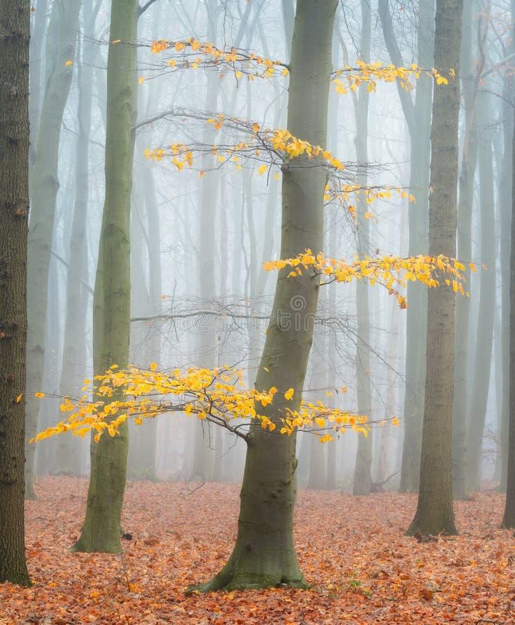 Der letzte Herbstlaub stockfoto