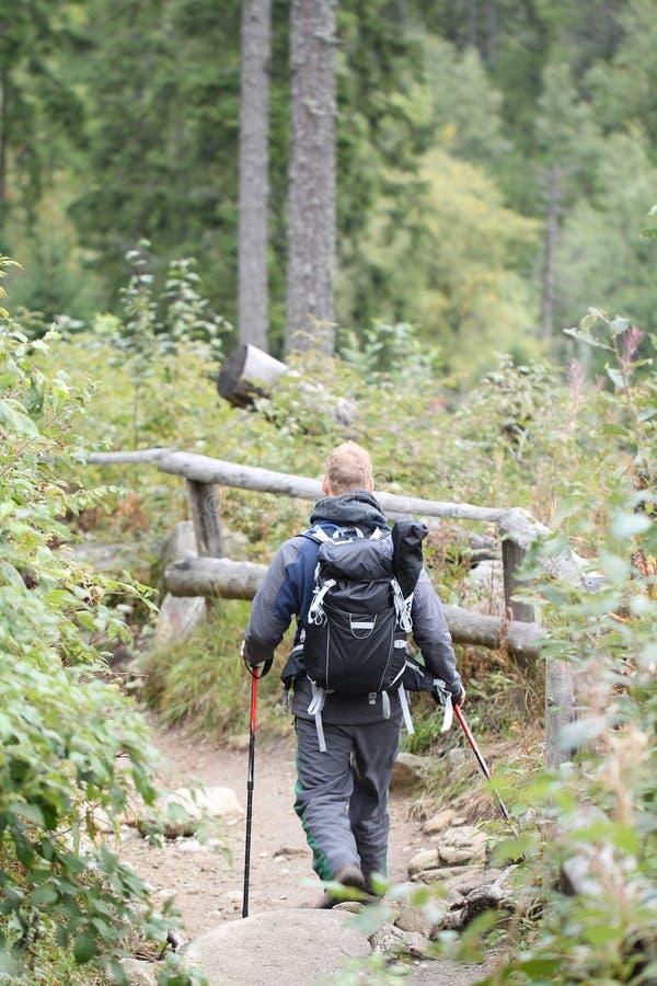 Der männliche Wanderer, der im Gebirgswald mit Wanderung wandert, haftet acti stockbilder