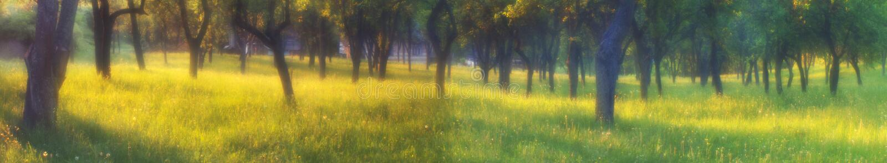 Der magische Garten lizenzfreies stockfoto