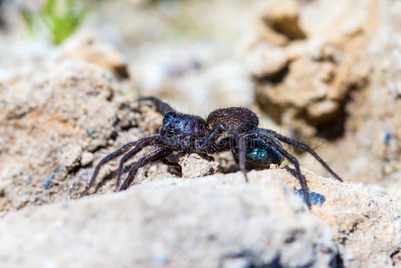 Der Makroschuß der kleinen schönen Spinne auf dem Boden und des Sandes am sonnigen Sommertag lizenzfreie stockfotos