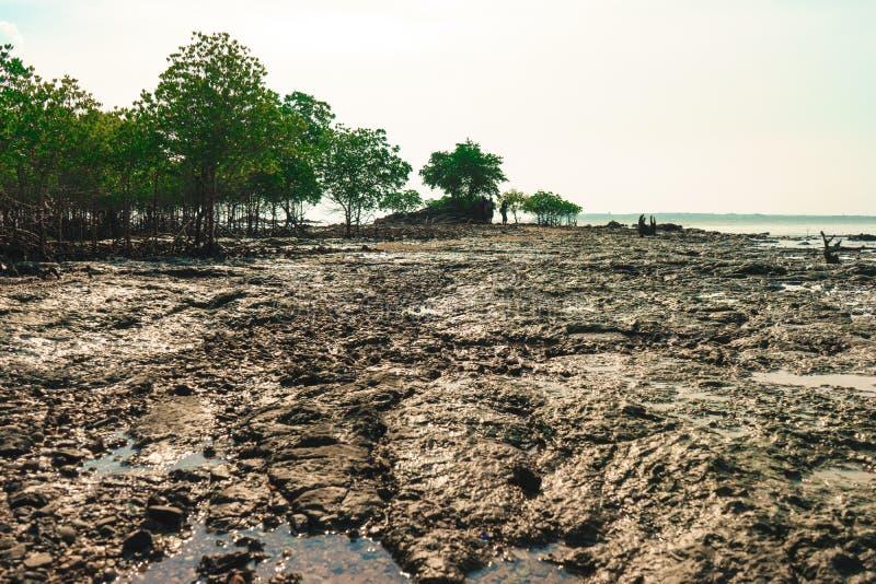 Der Mangrovenwald lizenzfreies stockfoto