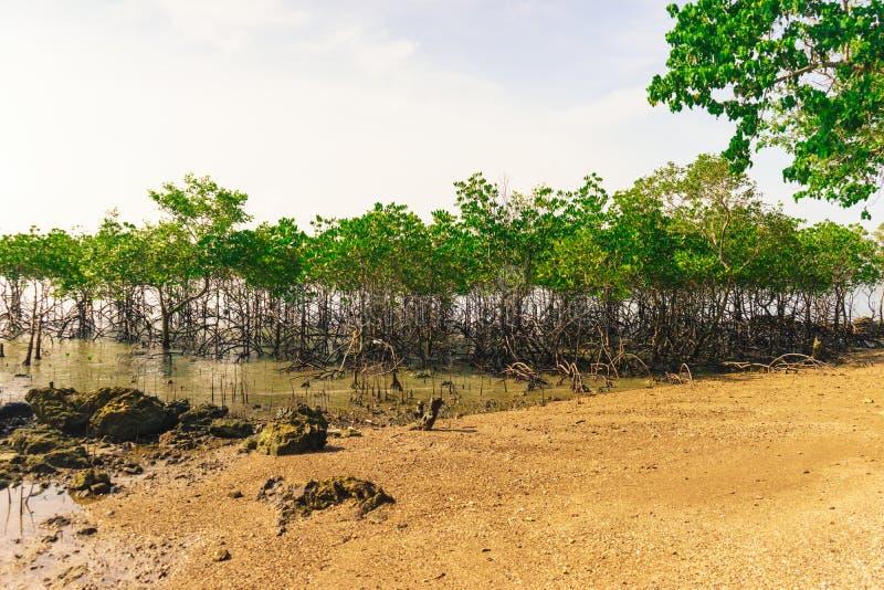 Der Mangrovenwald stockfotografie