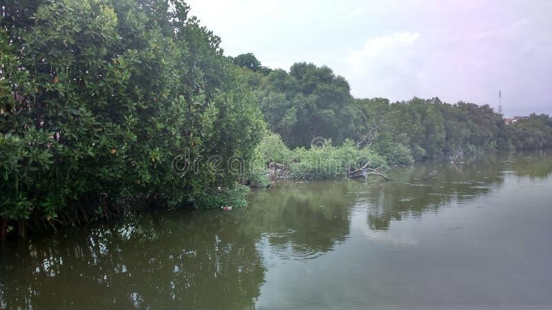 Der Mangrovenwald Aceh stockfoto