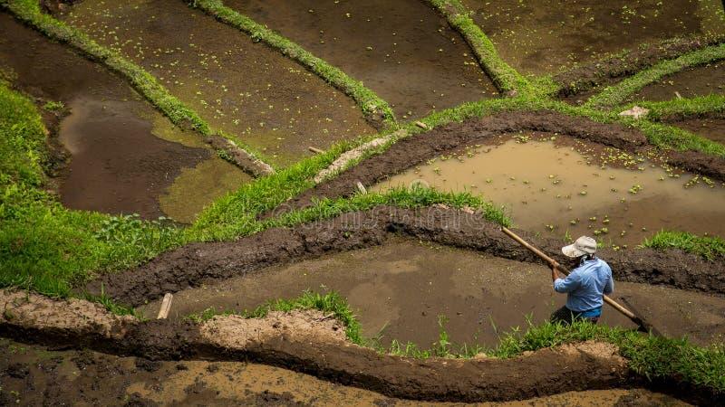 Der Mann arbeitet auf dem Reisgebiet in Bali lizenzfreies stockbild