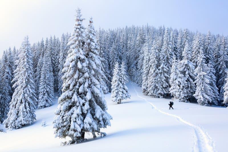 Der Mann auf dem schneebedeckten Rasen stockbilder