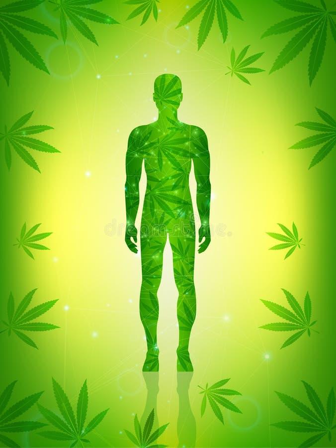 Der Mann steht auf dem grünen Boden des Hanfblattes lizenzfreie abbildung
