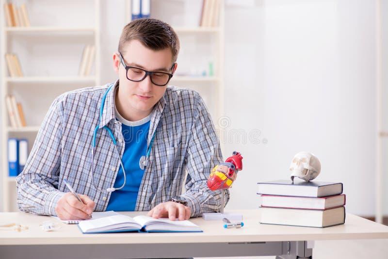 Der Medizinstudent, der Herz im Klassenzimmer während des Vortrags studiert stockfotografie