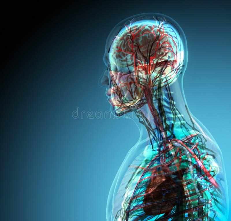 Großartig Bild Von Einem Anhang Des Menschlichen Körpers ...