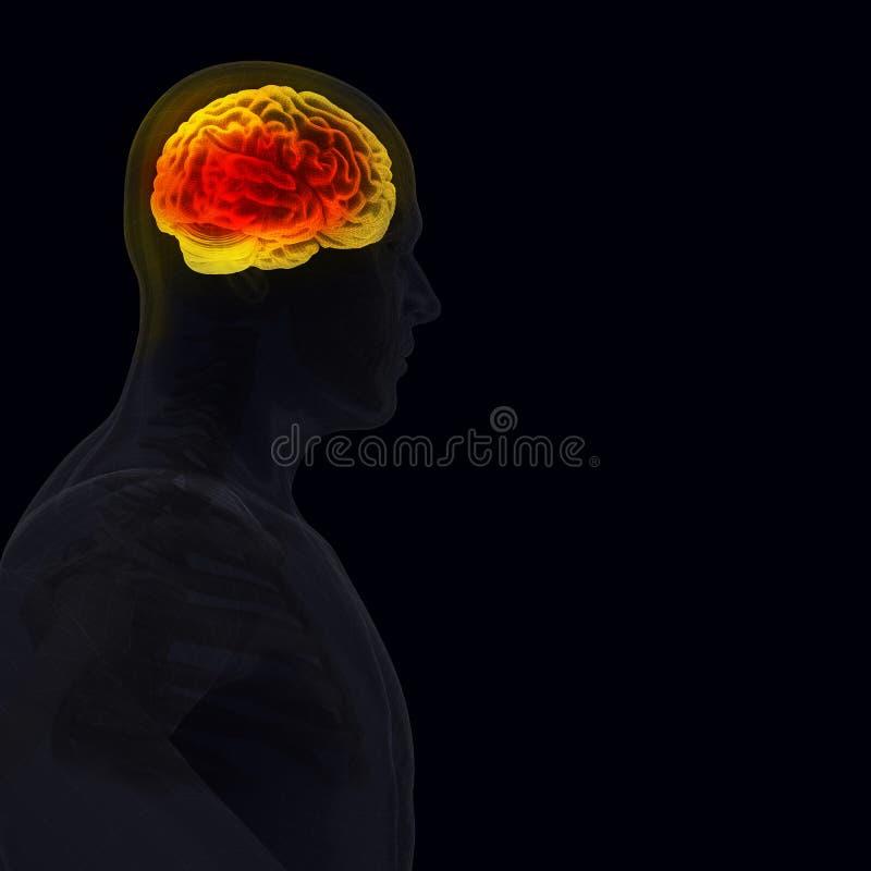 Der menschliche Körper (Organe) durch Röntgenstrahlen auf schwarzem Hintergrund lizenzfreie abbildung