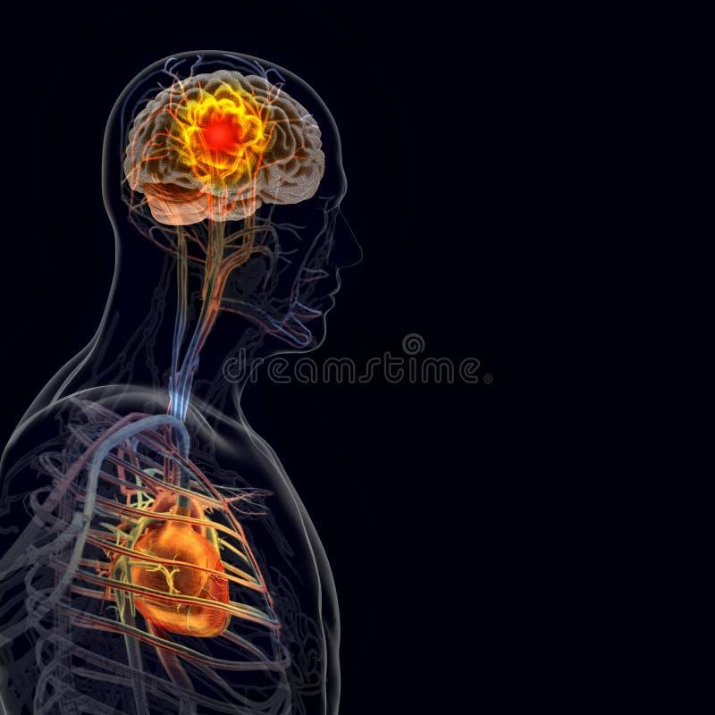Der Menschliche Körper (Organe) Durch Röntgenstrahlen Auf Schwarzem ...