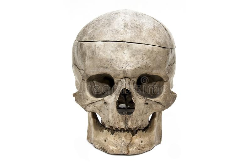 Der menschliche Schädel von der Front stockfotografie