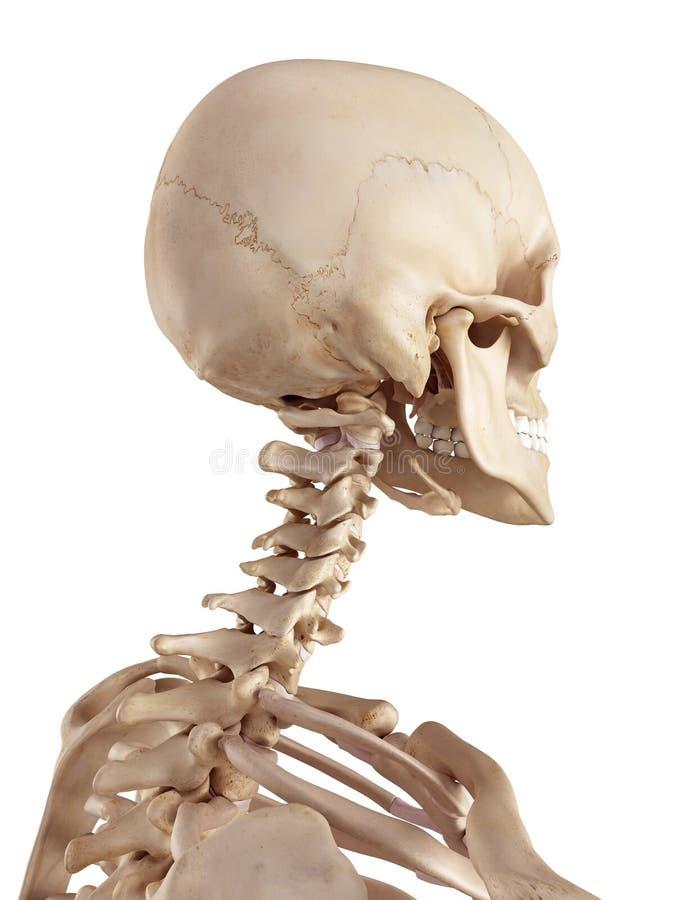 Gemütlich Menschlicher Hals Diagramm Ideen - Menschliche Anatomie ...