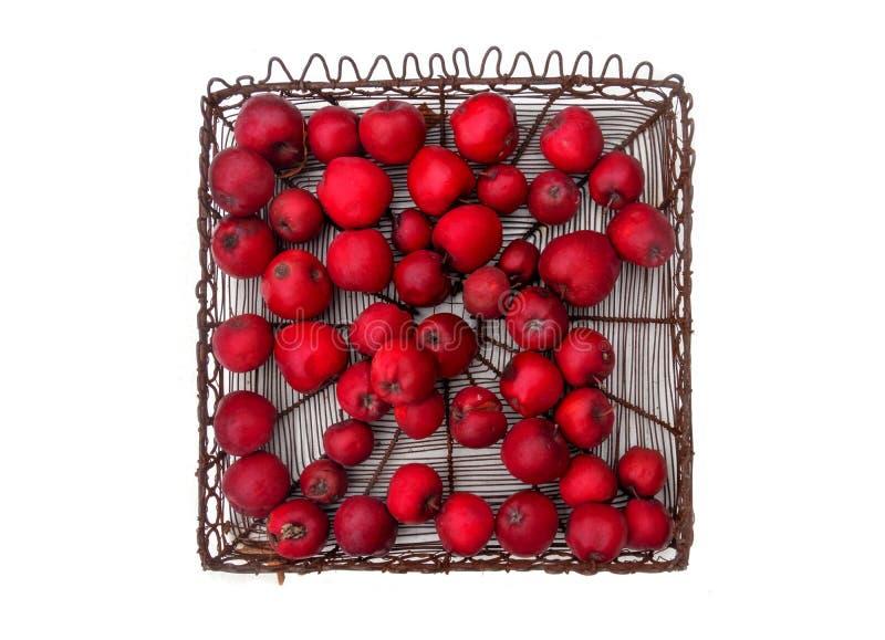 Der Metallkorb mit köstlicher neuer saftiger gesunder roter organischer Apfelapfelvielzahl Gloster 69 lokalisiert auf weißem Hint lizenzfreie stockbilder
