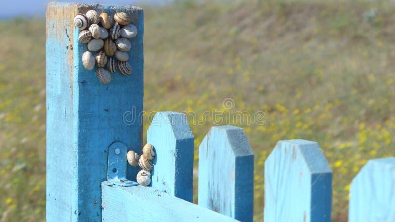 Der Mikro-Kosmos auf dem Zaun lizenzfreie stockfotos