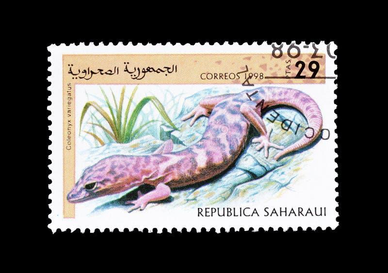Der mit einem Band versehene WestGecko auf Briefmarke lizenzfreie stockfotografie