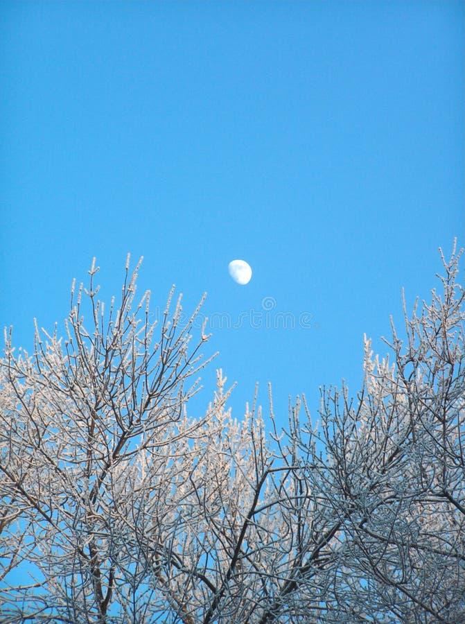 Der Mond im sauberen blauen Himmel stockfotos
