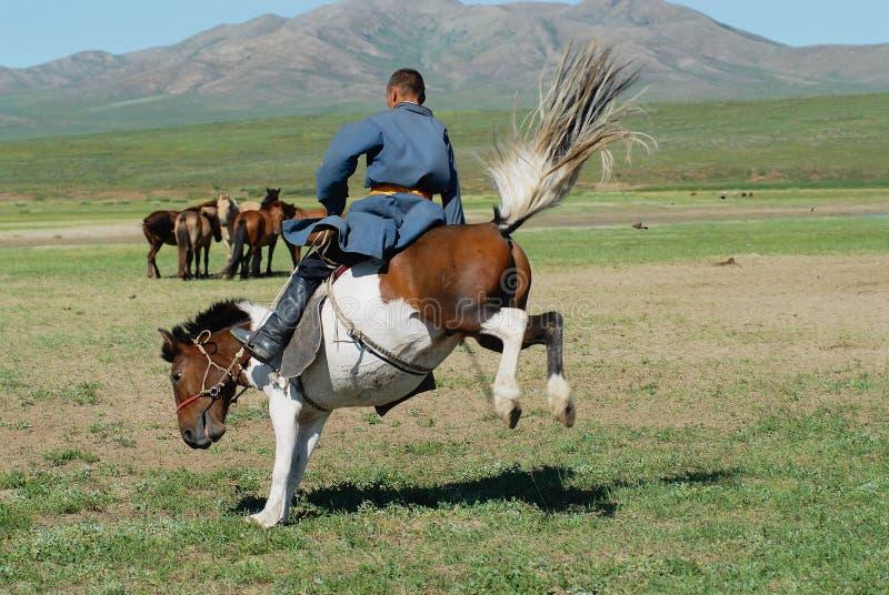 Der mongolische Mann, der traditionelles Kostüm trägt, reitet wildes Pferd in einer Steppe in Kharkhorin, Mongolei lizenzfreies stockfoto