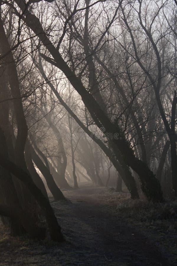 Der Morgennebel im Wald lizenzfreies stockbild