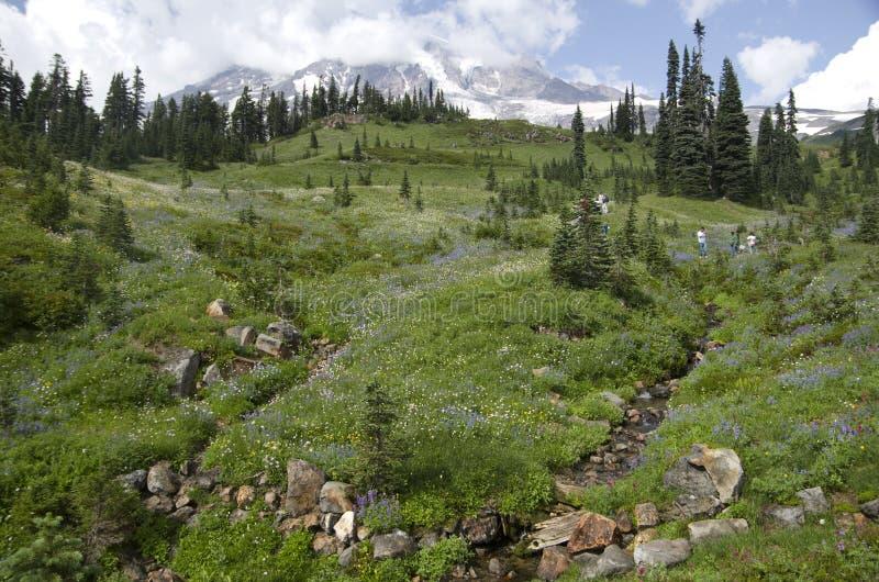 Der Mount Rainier im Sommer stockbilder