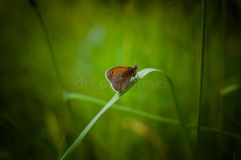 Der mysteriöse Schmetterling auf dem Buchstaben lizenzfreie stockfotos