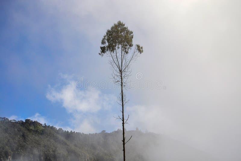Der Nebel bedeckt einen Baum lizenzfreie stockfotografie