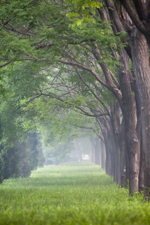 Der Nebel des Morgens stockfotos