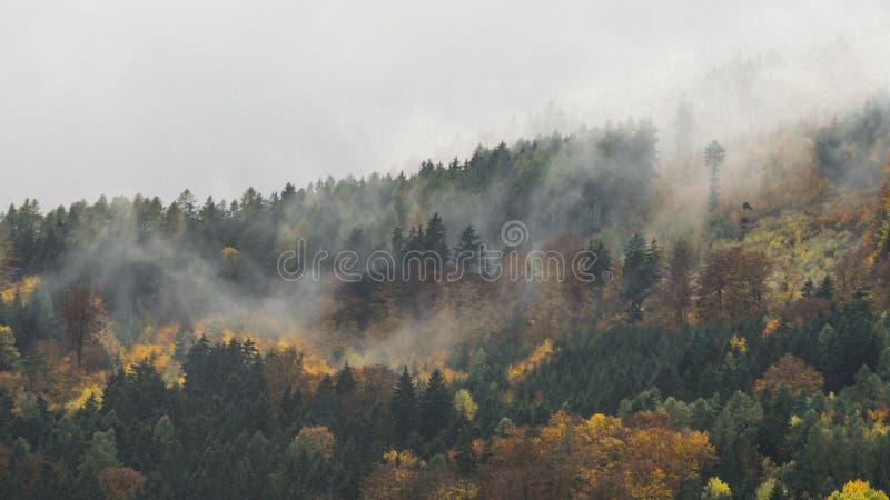 Der nebelige Wald des Herbstes stockfotografie