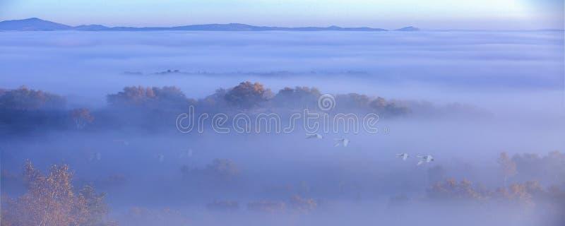 Der Nebelschwan stockfotografie