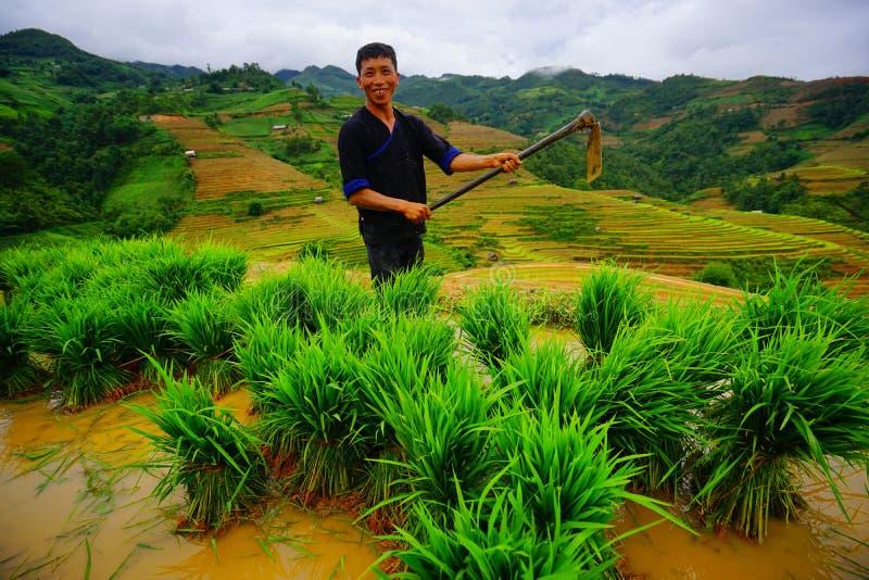 Der nicht identifizierte Landwirt erledigen Landwirtschaftsarbeit auf ihren Feldern lizenzfreies stockbild