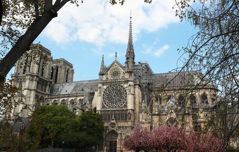 Der Notre Dame Cathedral am sonnigen Tag, Paris, Frankreich lizenzfreie stockbilder