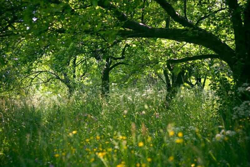 Der Obstgarten stockfotos